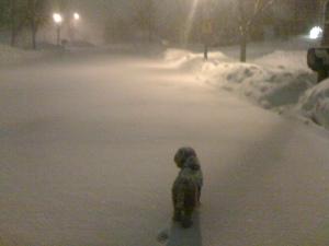 Henry Snow Dog